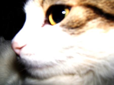 ==profil-sera
