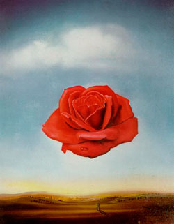 Dali-Meditative-Rose