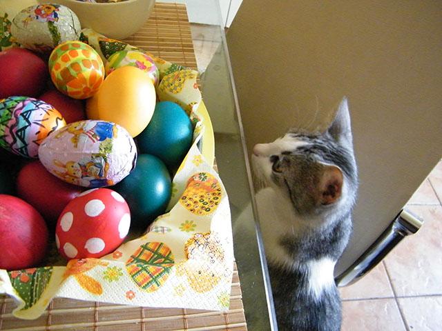 curiozitate felina 10